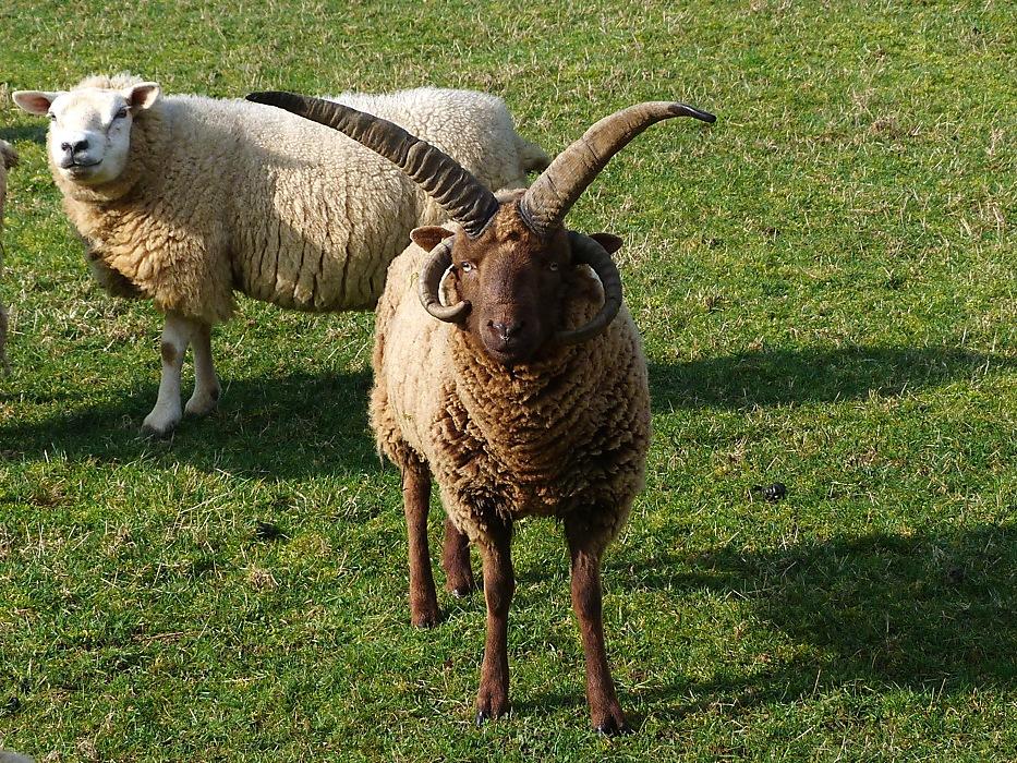 photoblog image Sheep Saturday